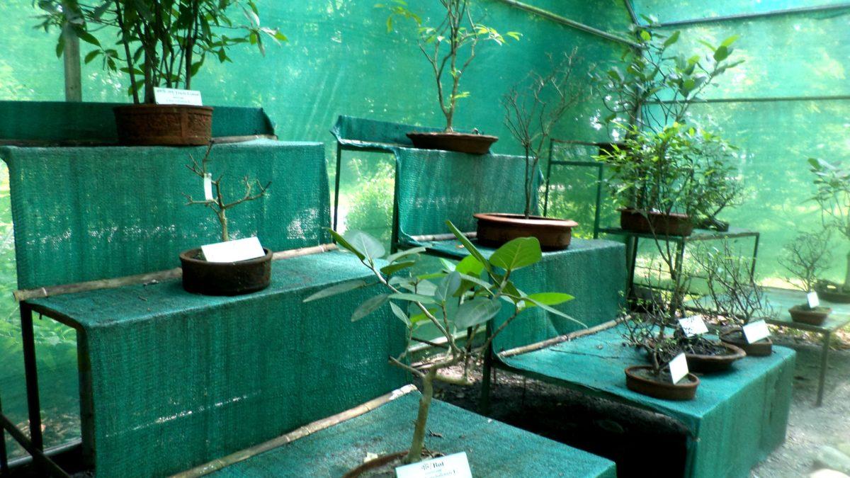 Bonsai, An Asian Art