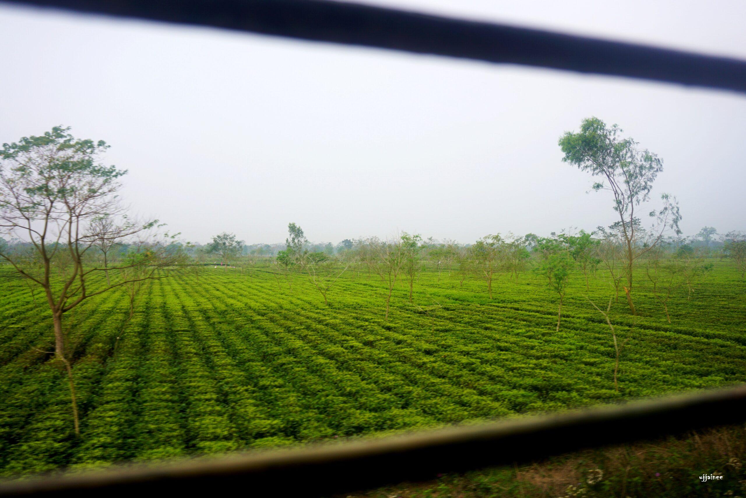 A Painting of Nature , Jayanti Tea Garden